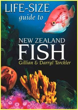 Life-size guide to New Zealand fish by Gillian Torckler