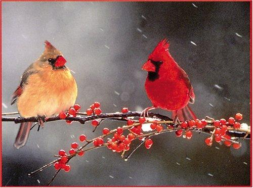 Christmas Cardinals Holiday Cards by Galison/Mudpuppy